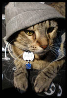 Gangsta Cat II by JacquiJax
