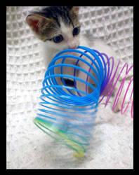Springer Cat I by JacquiJax