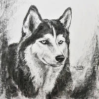Husky, Charcoal, A2 size by ReKinFeR