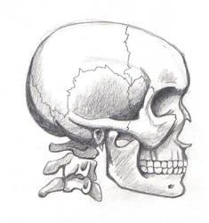 skull 1 by suki-red