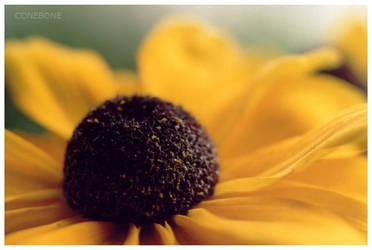 Flower by ConeBone