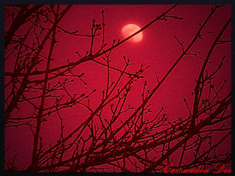 Red Moon by artistpunk