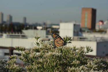 Urban Monarch III by robskind