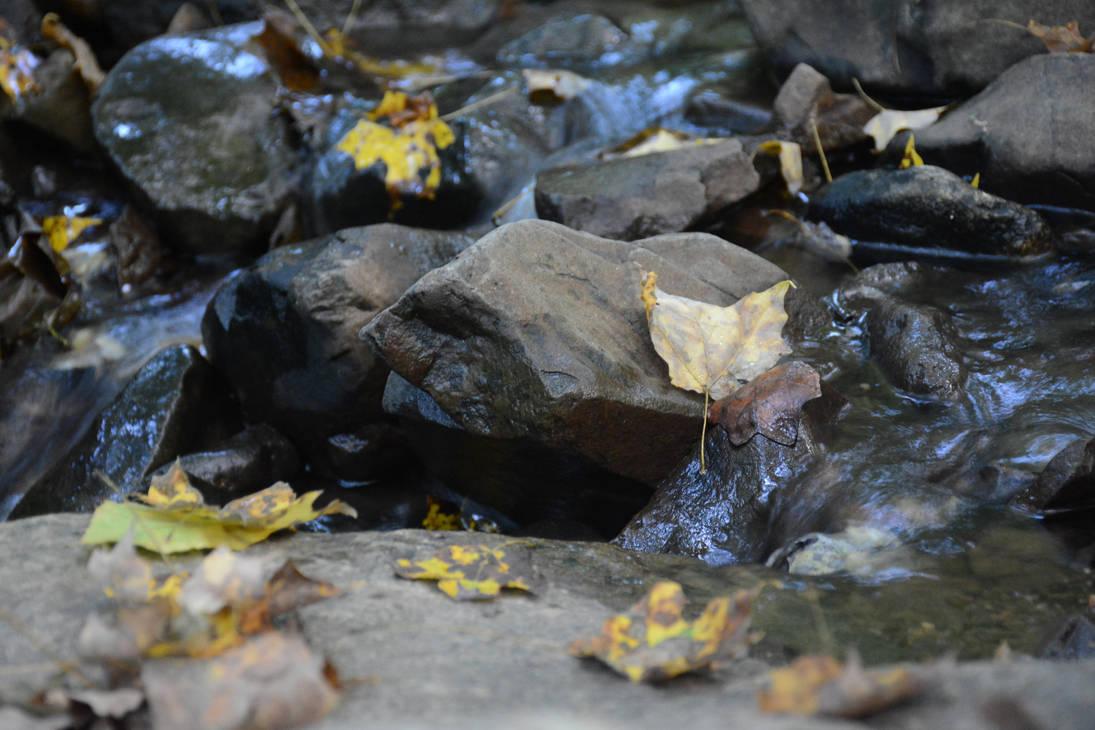 Fallen Leaves by robskind