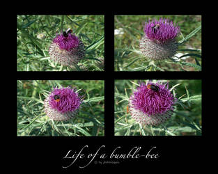 Life of a bumble-bee by photomorgana