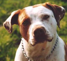 Good Dog by silence-stock