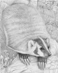 Badger badger badger mushroom mushroom by AuroraWolf