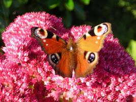 Butterfly by zertrin