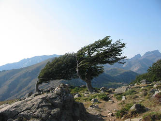 Windy Trees by zertrin
