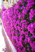 Flower Wall by zertrin