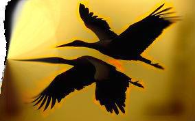 love birds by kermmit-loves-pie