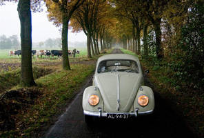 Autumn VW Beetle by mcdronkz