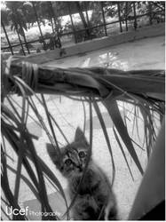 Tawatiw's little cat by snookart