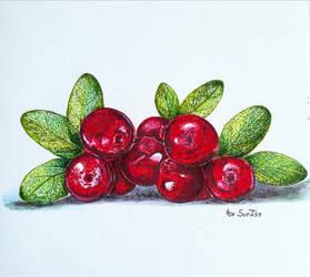 Cowberry by fomhar-orga