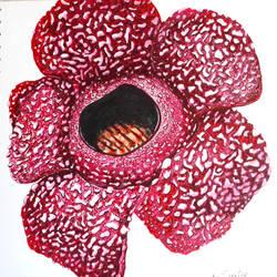 Rafflesia Arnoldii by fomhar-orga