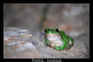 Green Frog on the Rock by t1987n