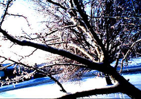 Iced tree by Sunlandictwin
