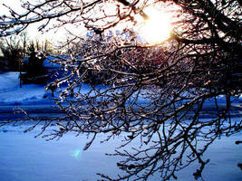 Icey tree in sunlight by Sunlandictwin