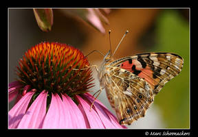 Painted Lady by SmoothEyes