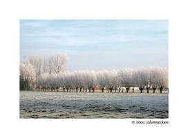 White willows... by SmoothEyes