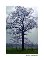Lonely oaktree by SmoothEyes