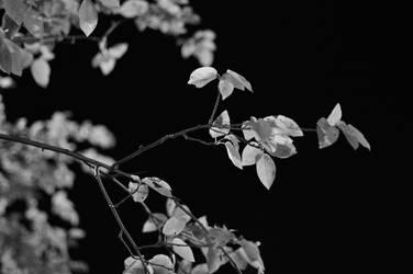 Nature at Night by Kutsuya