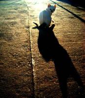 Black Cat, White Cat by Joplinfan