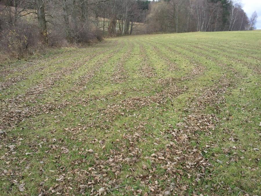 Leaf Rows by zwei2stein