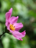 Blossom Five by kenazmedia