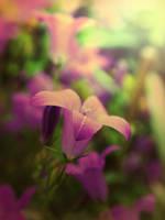 Flower Eight by kenazmedia