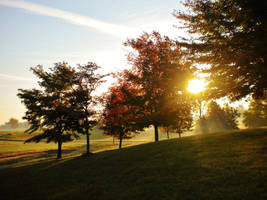 morning glory. by whendarknessfallsxx