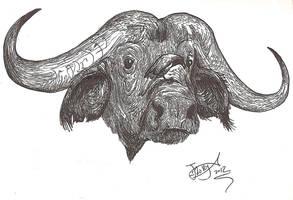 Cape Buffalo by HodariNundu