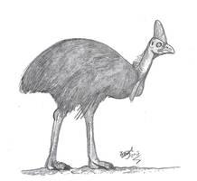 Cassowary doodle by HodariNundu