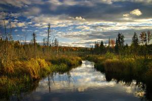 Bellevue Valley Marsh by tfavretto