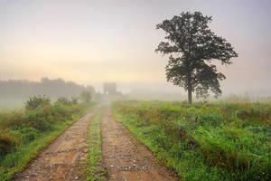 Shrouded in Fog by tfavretto