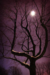 Mooncatcher by tfavretto