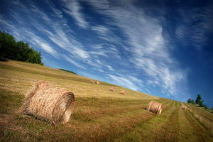 Hillside Hay Bales by tfavretto