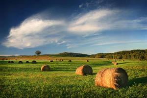 Radiant Ranchland by tfavretto