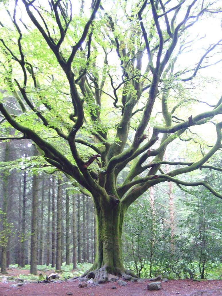Merlin's tree by oscargascon