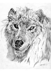 Wolflyon by daikotoDwolv