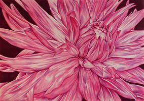 Pink Flower by shelleysupernova