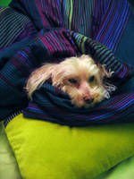 I'm cold by Daeg-Niht