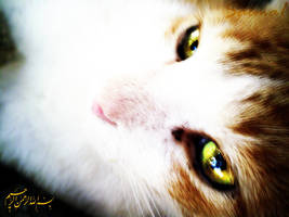 Cat's  Eyes by salma1