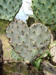 Metaphor of the thorns by RicardoPelaez