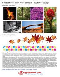 Sample Prints by cmrollins