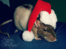 Ratty christmas by Kaikoura