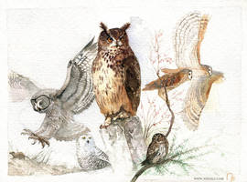 Owls in watercolors by Vaejoun