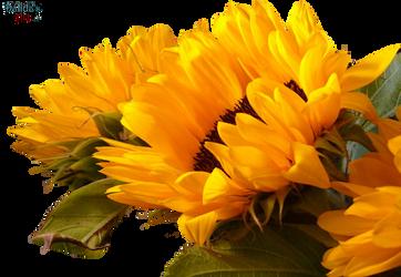 Flower PNG by makiskan