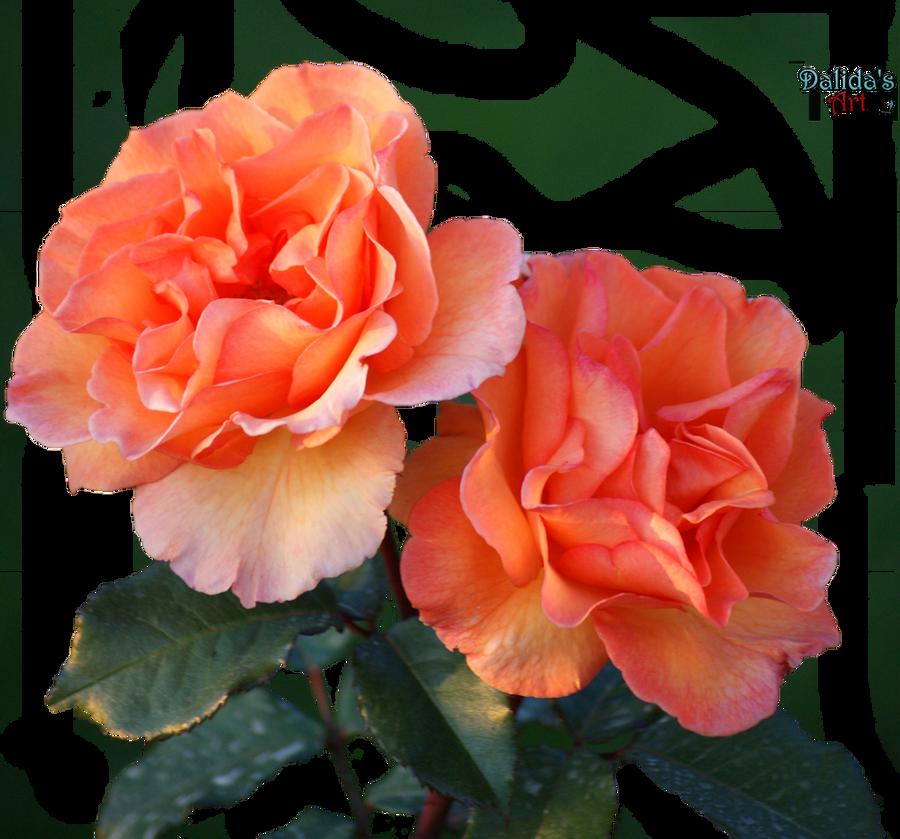 Beautiful Flower PNG By Makiskan On DeviantArt
