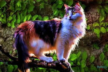 Beauty by makiskan